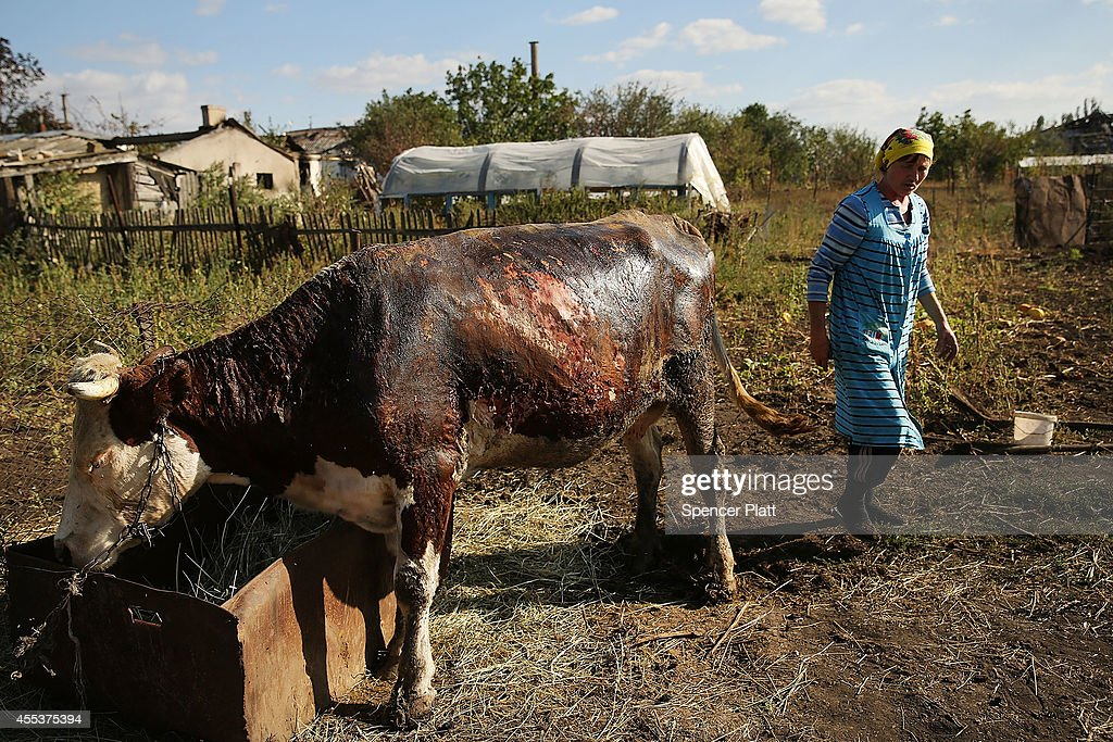 A woman walks by a cow burned by rocket fire, in the backyard of a district that witnessed heavy fighting in the war battered city of Lugansk on September 13, 2014 in Lugansk, Ukraine. Lugansk, a separatist held city close to the border with Russia, has witnessed some of the heaviest fighting between Russian backed separatist soldiers and Ukrainian troops. A lack of electricity, food, fuel and water are making life difficult for the remaining residents of the city. Despite a declared ceasefire between separatists forces and the Ukrainian military, tensions on the ground are still high throughout the east of the country. Sporadic shelling is heard in Donetsk daily and gunfire in the port city of Mariupol. The city of Donetsk has only around 300,000 people remaining out of a population of 900,000 due to the fighting.