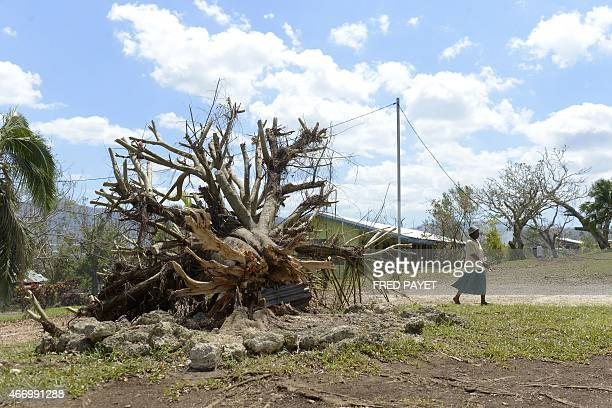 A woman walks by an uprooted tree near the Apostolic Church of Tagabe a district of Port Vila on March 20 where people can find shelter after Cyclone...