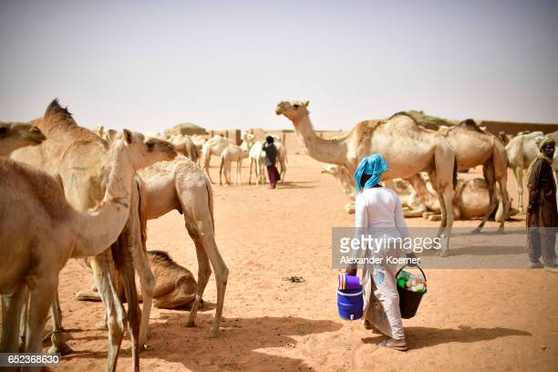 A woman walks by camels which are for sale during a weekly cattle market on the outskirts of Gao on March 7 2017 in Gao Mali The soldiers of the...