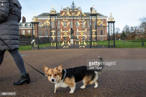 A woman walks her dog past Kensington Palace in Kensington Gardens on November 27 2017 in London England Prince Harry and Meghan Markle's engagement...