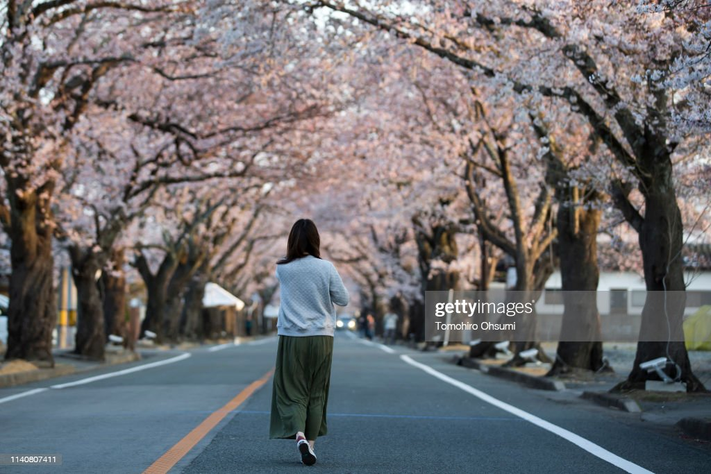 JPN: Residents Return To View Cherry Blossom Inside No-go Zone Near Fukushima Nuclear Plant