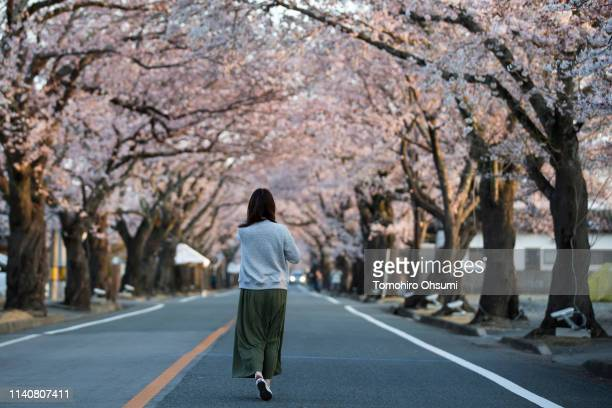 A woman walks in front of cherry trees in bloom outside the difficulttoreturn zone in the Yonomori area on April 6 2019 in Tomioka Fukushima Japan...