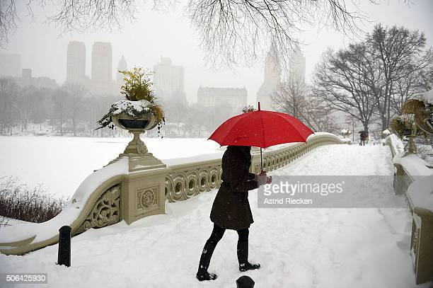 A woman walks in strong winds and heavy snow fall in Central Park on January 23 2016 in New York City A major Nor'easter is hitting much of the East...