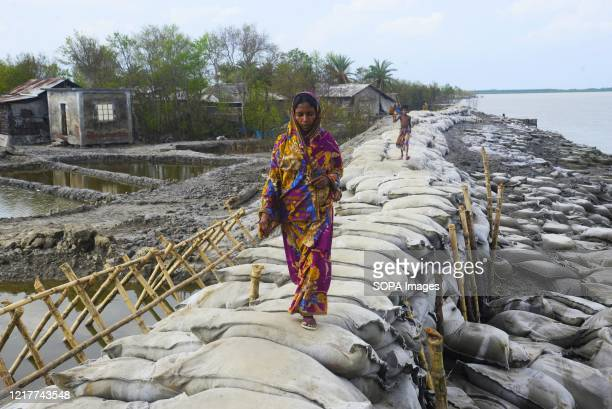 Woman walks on a new dam which was devastated by the Cyclone Amphan. Thousands of shrimp enclosures have been washed away, while numerous thatched...