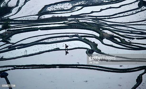 A woman walks on a path between irrigated fields in Yuanyang Yunnan province South China on 13th March 2015