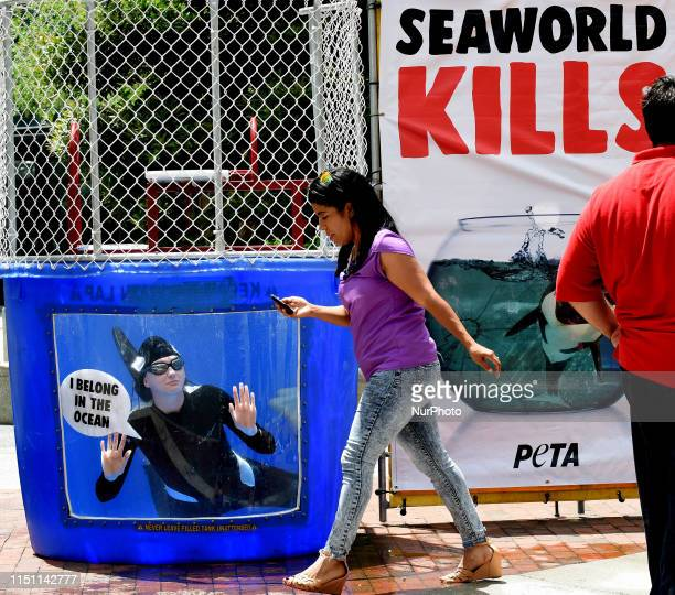Woman walks past as a PETA member wearing an orca suit swims in a small tank of water urging passersby not to buy tickets to SeaWorld on June 20,...