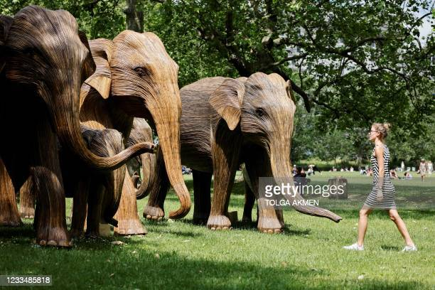 Woman walks past life-size sculptures of a herd of Asian elephants set up by the Elephant Family and The Real Elephant Collective to help educate the...