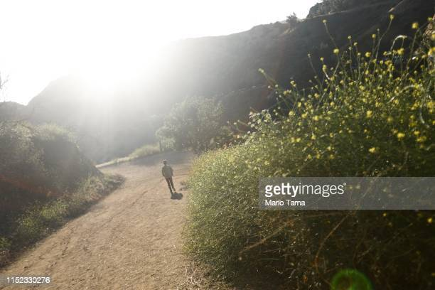A woman walks past nonnative black mustard plants along a trail in Griffith Park on May 28 2019 in Los Angeles California A wet spring in Southern...