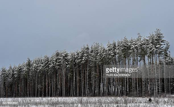 TOPSHOT A woman walks past snowcovered trees in a forest near the village of Mesherskoye some 70 km outside Moscow on February 1 2016 / AFP / YURI...