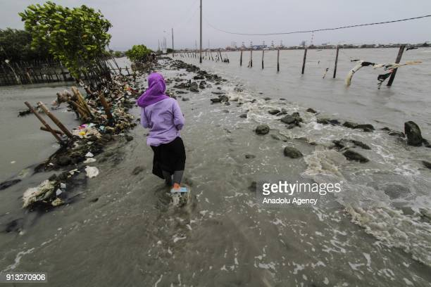 A woman walks through a broken embankment caused by the rising of sea level in SemarangDemak highway in Central Java Indonesia on February 2 2018...