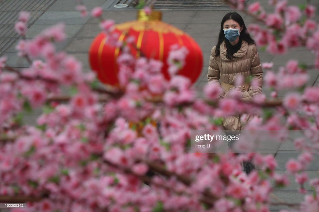 A woman walks through a plastic peach tree during severe pollution on January 30, 2013 in Beijing, China. The fourth round of heavy smog to hit Beijing in one month has sent more people to the hospital with respiratory illnesses and prompted calls for legislation to curb pollution. The haze choking many Chinese cities covers a total area of 1.3 million square kilometers, the China's Ministry of Environmental Protection said Tuesday.
