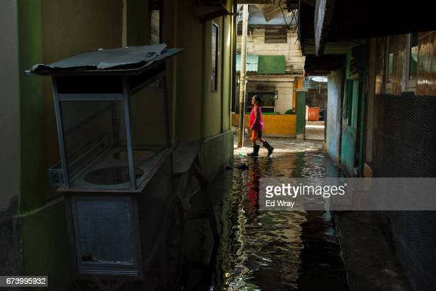 A woman walks through an everpresent flood due to her neighborhood's below sea level elevation on April 27 2017 in Jakarta Indonesia Jakarta one of...