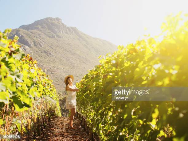 woman walks through beautiful cape vineyard - constantia stock pictures, royalty-free photos & images