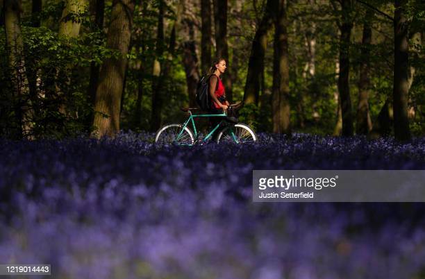 Woman walks through bluebells in the woods at Wanstead on April 15, 2020 in London, England. The Coronavirus pandemic has spread to many countries...