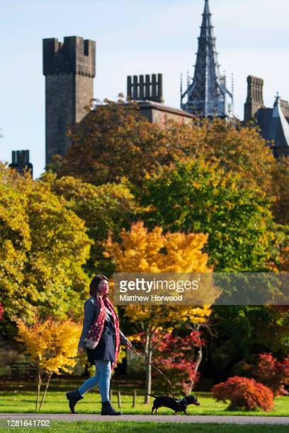 Woman walks through Bute Park, which backs on to Cardiff Castle, while walking a dog on October 22, 2020 in Cardiff, Wales. Wales will go into a...