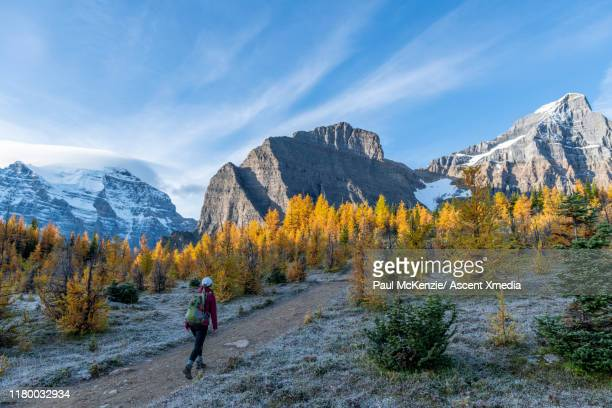 woman walks through mountains in autumn colors - ascent xmedia stock pictures, royalty-free photos & images