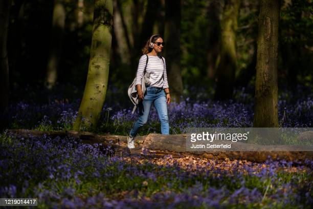 Woman walks through the bluebells in the woods at Wanstead on April 15, 2020 in London, England. The Coronavirus pandemic has spread to many...