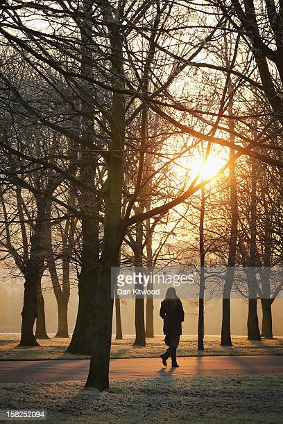 A woman walks through the early morning frost in Regents Park on December 12 2012 in London England Forecasters have warned that the UK could...