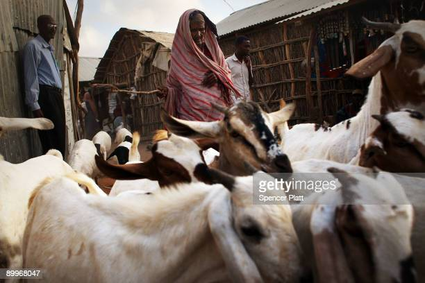 Woman walks with a herd of goats in Dadaab, the world�s biggest refugee complex, August 20, 2009 in Dadaab, Kenya. The Dadaab refugee complex in...