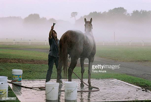 Woman Washing a Thoroughbred Horse