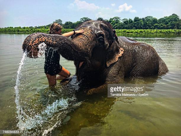Woman Washing Elephant While Standing In River