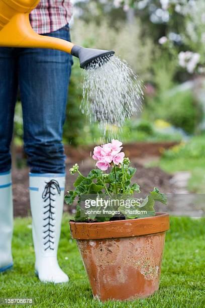 A woman watering a flower.