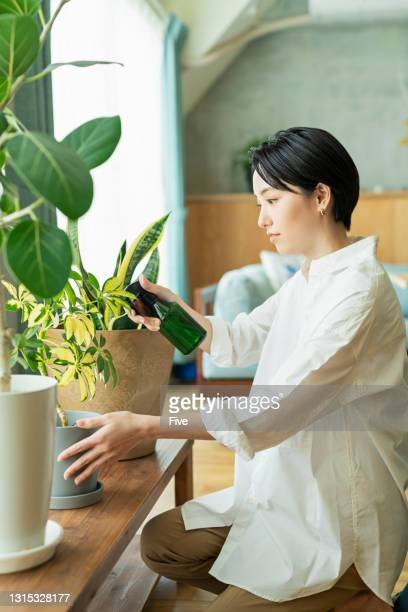 a woman watering a houseplant. - ornamental plant stock pictures, royalty-free photos & images