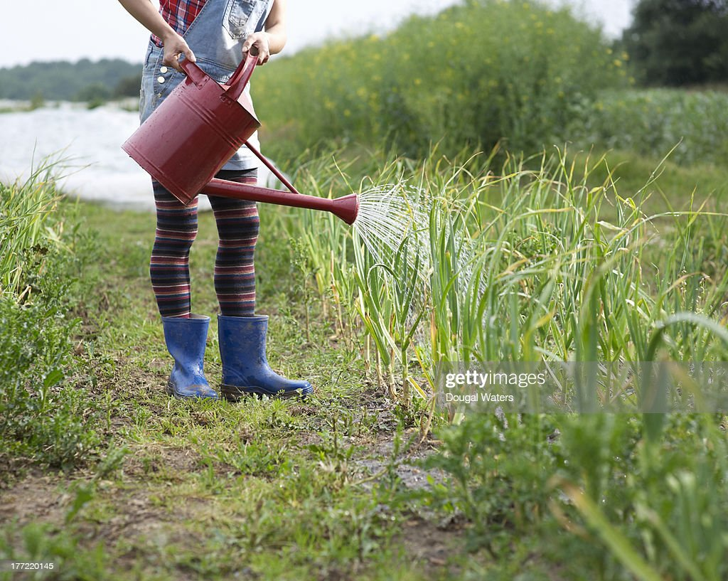 Woman watering crops on farm. : Stock Photo
