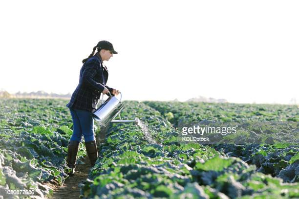 woman watering crops - agricultural occupation stock photos and pictures