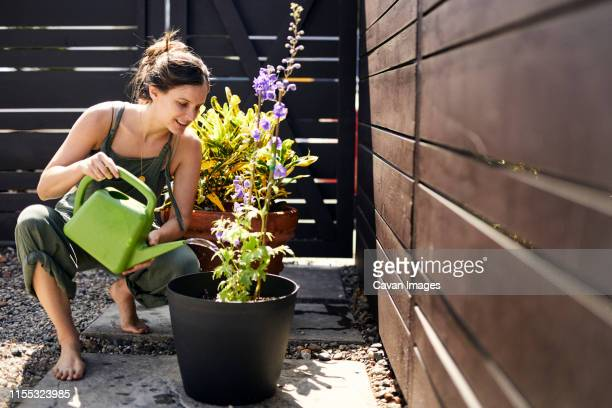 woman watering flowering plant in backyard - watering stock pictures, royalty-free photos & images