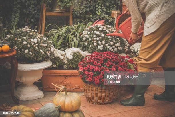 femme d'arrosage fleurs et plantes sur back porch - octobre photos et images de collection