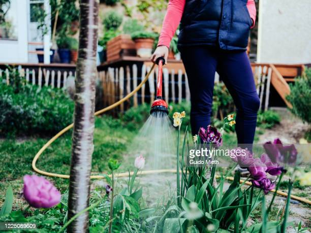 woman watering flowers in garden. - guido mieth stock pictures, royalty-free photos & images