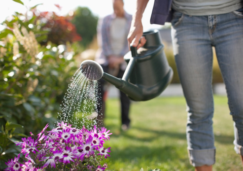 Woman watering flowers in garden with watering can 137086506