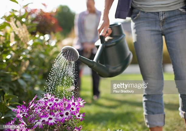 woman watering flowers in garden with watering can - tuinieren stockfoto's en -beelden