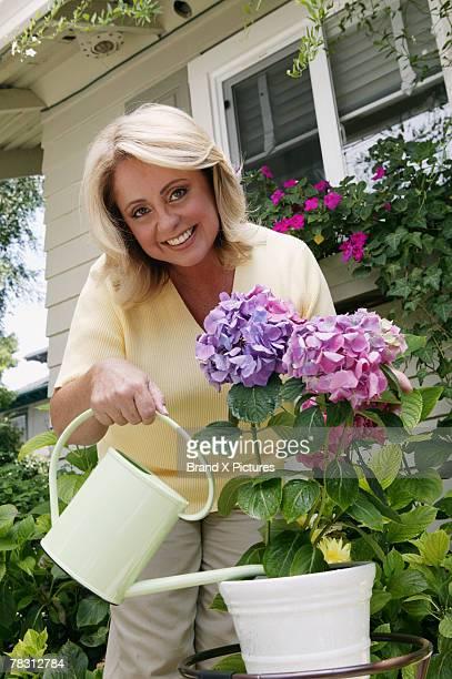 Woman watering hydrangea