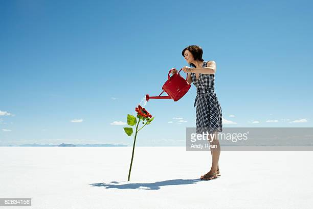 Woman Watering Lone Flower Growing in Desert.