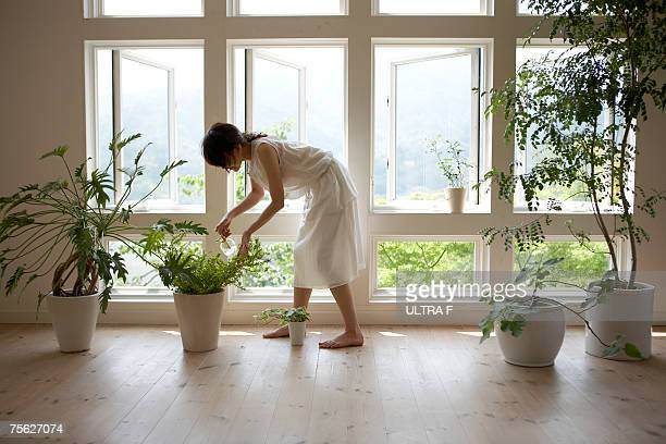 Woman watering plant by window in home