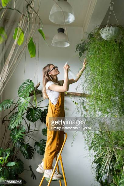woman watering plantings in workshop - reality fernsehen stock pictures, royalty-free photos & images