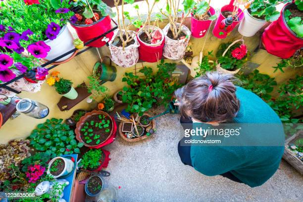 woman watering plants and flowers in balcony garden - balcony stock pictures, royalty-free photos & images
