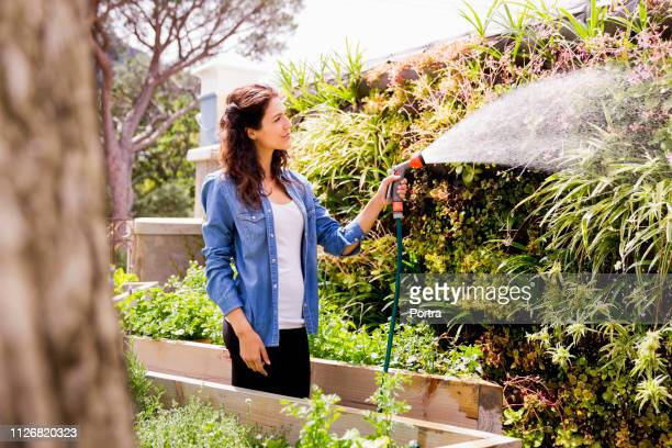 woman watering plants at community garden - watering stock pictures, royalty-free photos & images