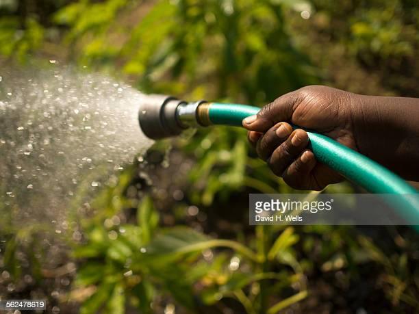 Woman watering plants at Manton Bend Community Garden in Providence, Rhode Island.