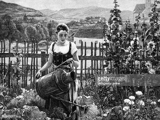 Woman watering plants in her garden historic wood engraving about 1897