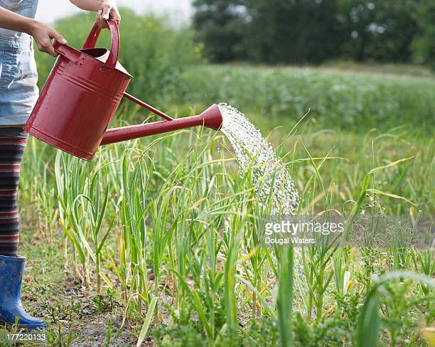 Woman watering plants on small holding farm.