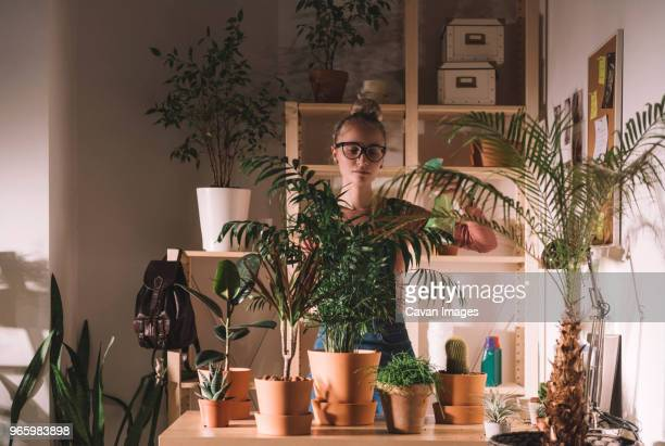 woman watering potted plants using spray bottle at home - zimmerpflanze stock-fotos und bilder