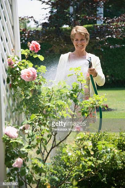 Woman watering rose bush