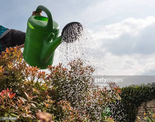 Woman watering shrubs, Germany