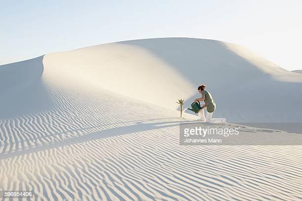 Woman Watering Tree Growing in Desert