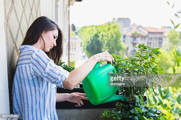 woman watering your plants - green fingers stock pictures, royalty-free photos & images