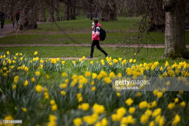 Woman wearing a face mask because of the coronavirus pandemic walks past daffodils in Green Park in central London on March 26, 2021.