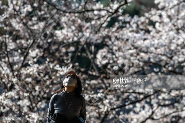 A woman wearing a face mask enjoys cherry blossom season on March 26 2020 in Tokyo Japan Tokyo Governor Yuriko Koike held a press conference last...